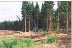 "Minister insists no ""done deal"" on forests"