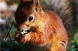 Lake District warned over black squirrels