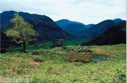 Yews and other trees make for fine Lakeland walk
