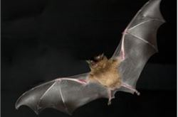 Cycle path tunnel lights to be turned off to help bats